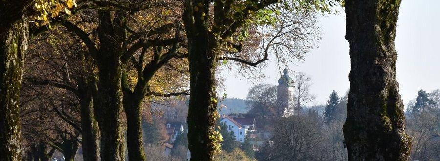 Blick zwischen die Bäume hindurch auf die Ebersberger Pfarrkirche